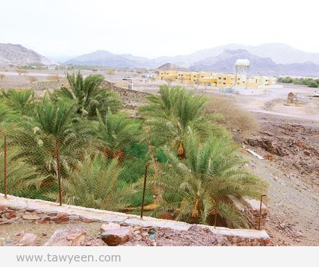 منطقة الصرم .. موطن الحجر والنخيل وإحدى أقدم مناطق الفجيرة