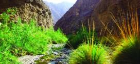 الوريعة.. وادي الحياة الفطرية.. محمية تضم ثدييات وزواحف وبرمائيات وأسماكاً ولافقاريات