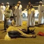 دهس حصان على شارع اللؤلؤة بالفجيرة  بعد ان اعترت الحصان حالة من الهيجان