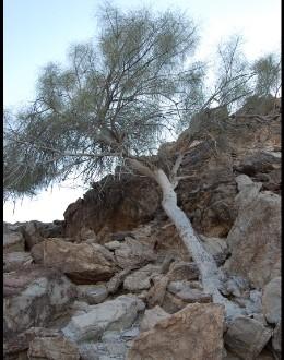 «البيئة» تحمي 42 نوعاً من النباتات المهدّدة بالانقراض