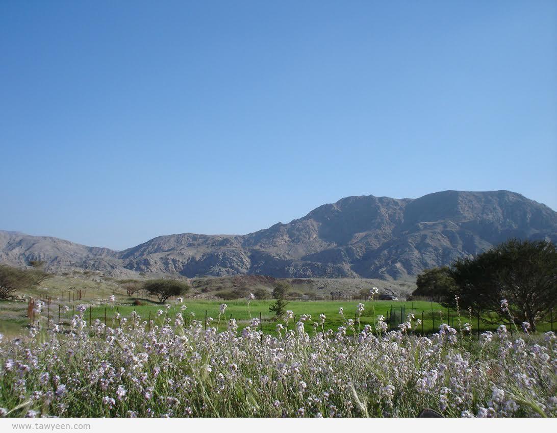 وعوب الطويين الجبلية.. منبت القمح في موسم الشتاء