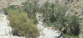 وادي العبادلة.. خلايا من عسل وشفاء ومناظر طبيعية خلابة وسط الجبال العالية