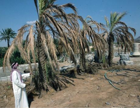 بيع المياه الجوفية يتسبب بجفاف مزارع السيجي